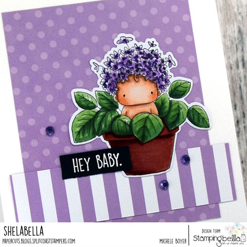 Stamping Bella Hydrangea Baby in a Pot (close-up)